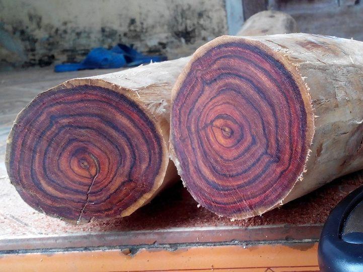 cây gỗ Sưa Đỏ