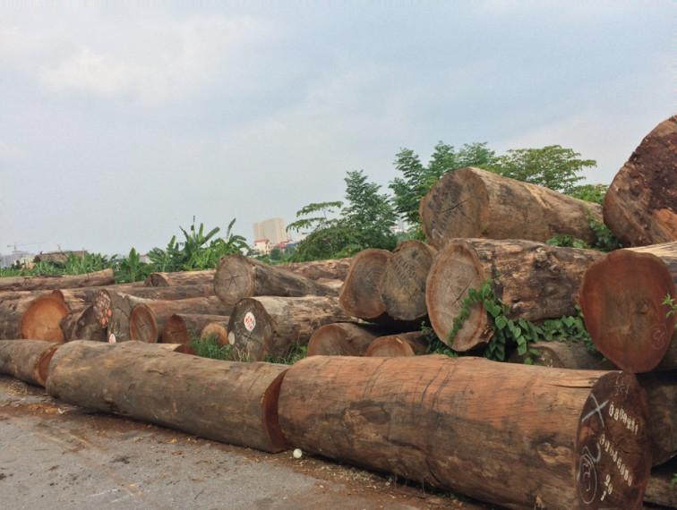 Cây Gỗ Lim là gỗ gì? thuộc nhóm mấy? loại nào là tốt nhất.